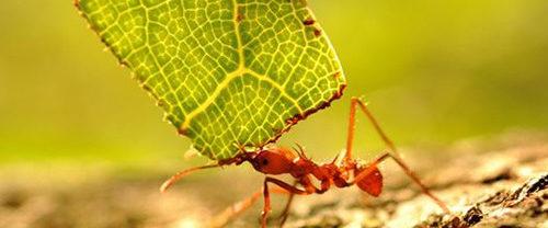 Come allontanare le formiche dagli alberi da frutto