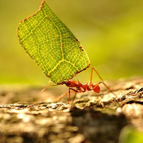 Come allontanare le formiche dagli alberi da frutto - CopyBlogger