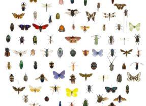 Come riconoscere le punture degli insetti