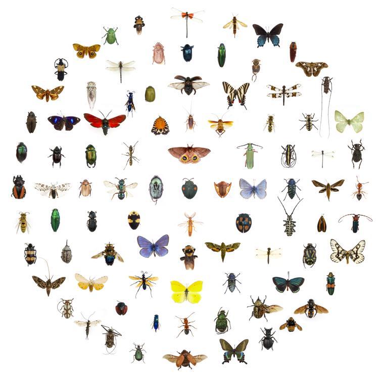 Come riconoscere le punture degli insetti - CopyBlogger