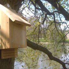 Come costruire una bat box