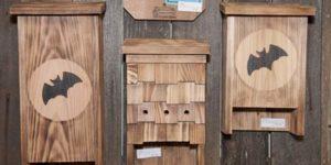 Come costruire una bat box - CopyBlogger