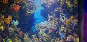 Malta National Aquarium - camaleonte pesci