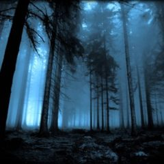 Harry Potter: apre al pubblico la Foresta Proibita