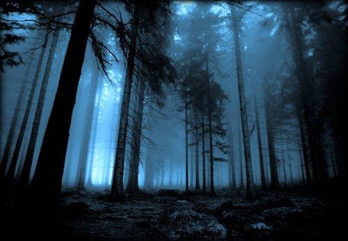 La Foresta Proibita : Harry Potter. Anche un babbano può visitarla