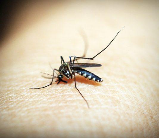 Come togliere le punture di zanzara