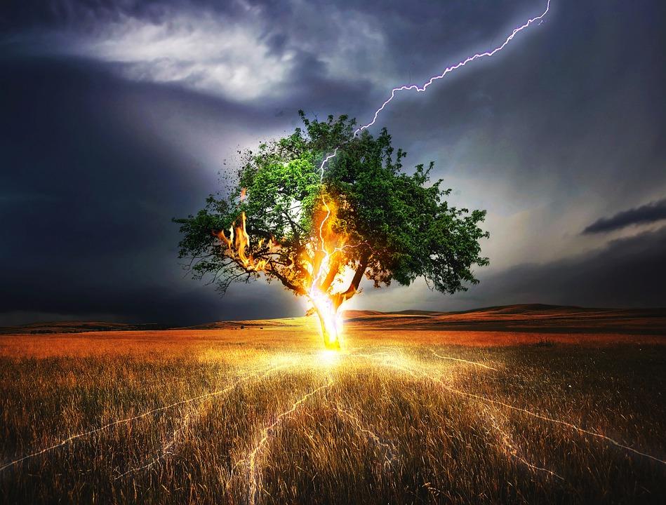 gli alberi e i fulmini